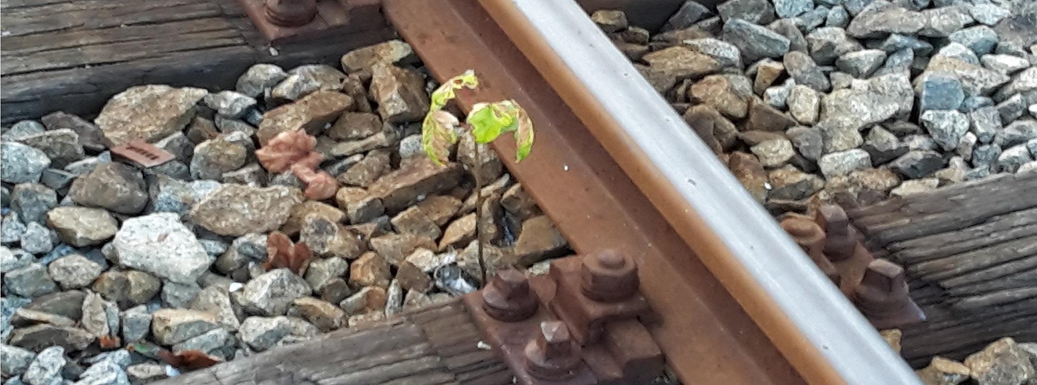 Noch ein zartes Pflänzchen - Der Regelbetrieb auf der Waldbahn von Gotteszell nach Viechtach